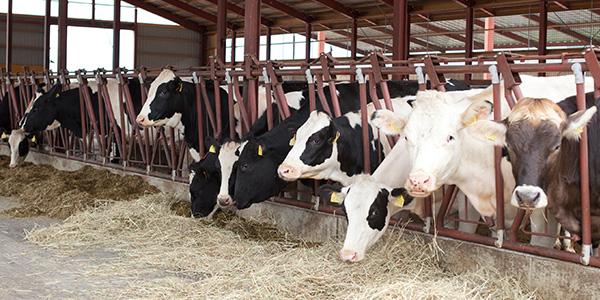 畜産資材一覧 | 全農畜産サービス株式会社